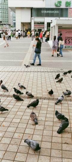新宿駅前の鳩と歩く人