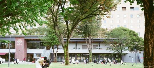 公園の芝生広場