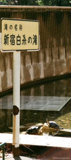 新宿白糸の滝の亀