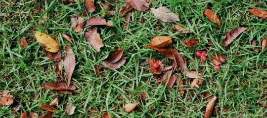 芝生の上の落ち葉と赤い木の実