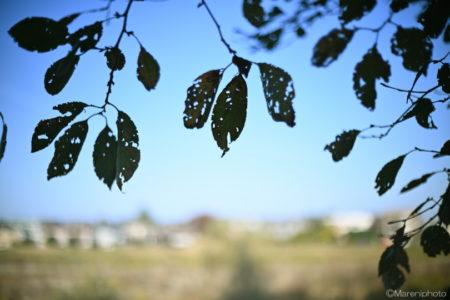 枯れかかった木の葉