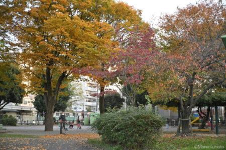 紅葉した木々のある公園