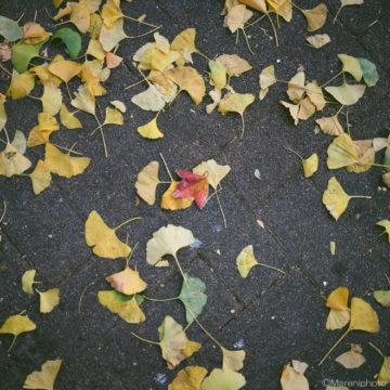 黄色と紅い葉