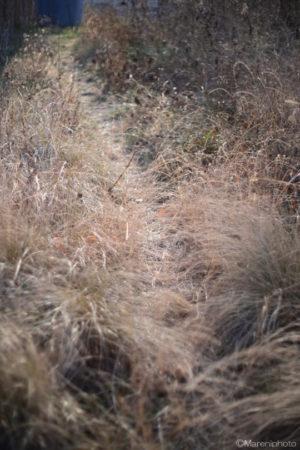 枯れ草の踏み分け道