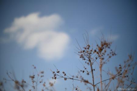 枯れ草と雲