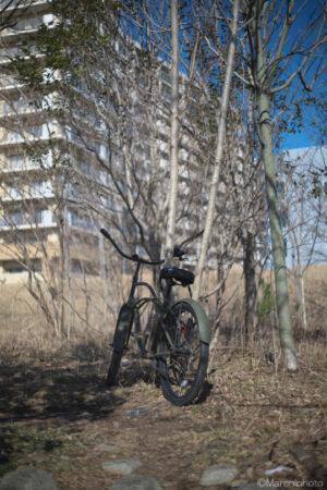 木立と自転車