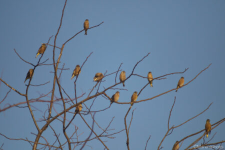 枝にとまる鳥たち