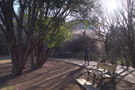 朝の公園のジョガー