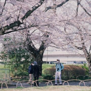 桜の下で談笑する人たち