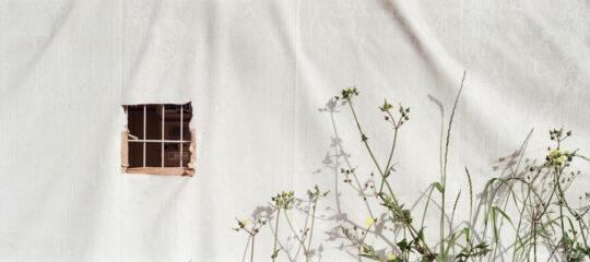窓の空いたシートと草