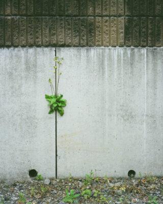壁の隙間の草花
