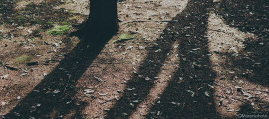 木の幹の影